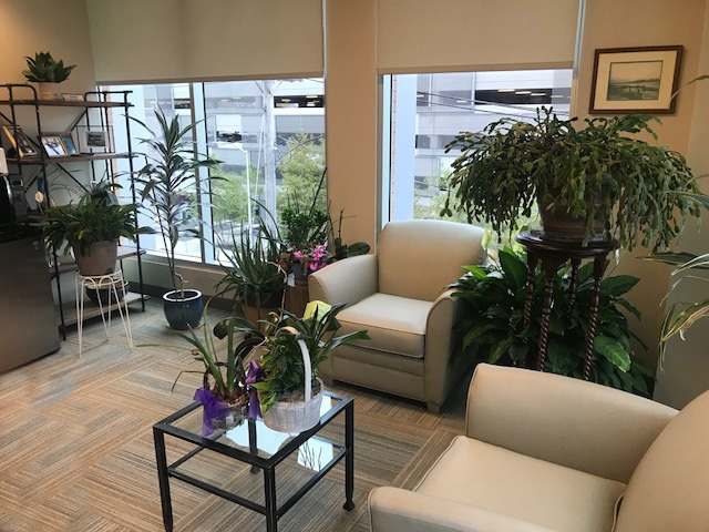 The Health Benefits Of Houseplants Continuum Of Care Inc,Budget Friendly Home Bar Ideas On A Budget